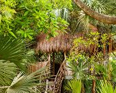 stock photo of primite  - Primitive thatched shelter in dense Mexican jungle