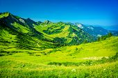 Beautiful mountainous landscape, fresh green plants and trees on high Alpine mountains, majestic pan