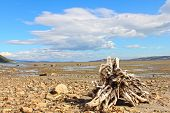 foto of arctic landscape  - Summer arctic landscape with lake mountains and dry tree root - JPG