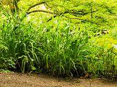 Green Plants Grass In Park Or Garden Outdoor