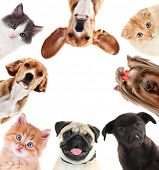 picture of petting  - Collage of cute pets isolated on white - JPG