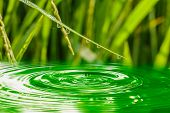 Drops Of Water On Green Grass