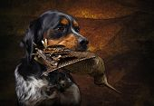 stock photo of ammo  - Hunting dog with trophies woodcock - JPG