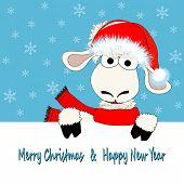 Sheep And Card