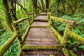 foto of rain  - Beautiful Rain Forest At Ang Ka Nature Trail In Doi Inthanon National Park - JPG