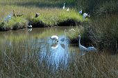 image of wetland  - Tropical birds in the wild on the wetlands of Florida - JPG