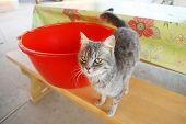 Grey Cat On Sitting Bench