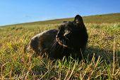 Black Cat In Grass On Meadow