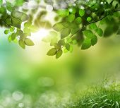 natural green background with selective focus.