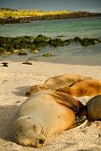 foto of sea lion  - Closeup shot of cute sea lions sleeping in La Loberia beach in San Cristobal - JPG