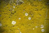 image of excrement  - Concrete wall texture with moss and white stains - JPG