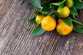 stock photo of tangerine-tree  - Tangerine tree branch  on wooden table background - JPG