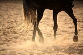 stock photo of horse-breeding  - Trotting away horse legs close up in sunset - JPG