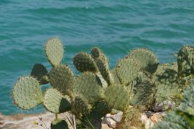 foto of spiky plants  - A Croatian globular cactus plant with a hairy and thorny skin - JPG