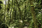 stock photo of biodiversity  - jungle in Bolivian pre - JPG