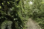 Jungle in Bolivian pre mountain tropical rain forest in Parque Carascu part of amazon basin nice gre
