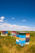 stock photo of bee-hive  - Colorful bee hives with bees swarming in the blue sky - JPG