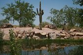 Desert Landscape F