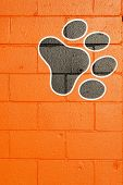 Paws On The Wall