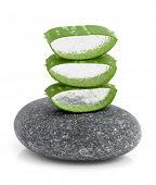 folha de aloe vera em uma pedra