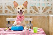 Dog Eating A The Table With Food Bowl poster