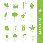 Vector - Green plants, leaves, trees icon symbol set.