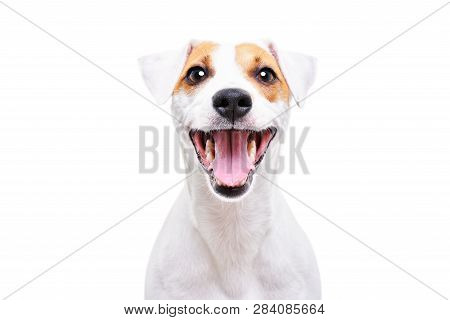 Portrait Of A Funny Dog