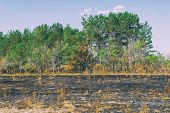 Scorched Meadow In Front Of The Forest. Forest Fumes. Soft Focus poster