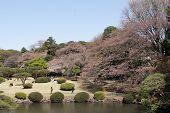 Tokyo Park During Hanami