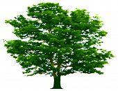 Vektor-Baum