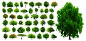 Vector trees - This image is a vector illustration and can be scaled to any size without loss of res