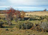 Seno Skyring, Patagonia.