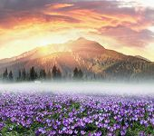 Floral Mountain Spring poster