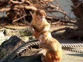 Monkey Kids