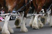 Horse Team, Hooves & Fetlocks