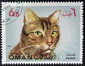 OMAN - CIRCA 1971: stamp printed in State of Oman shows Somali cat breed, circa 1971