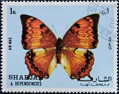 SHARJAH - CIRCA 1972: A stamp printed in Sharjah shows butterfly circa 1972
