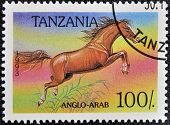 TANZANIA - CIRCA 1993: A stamp printed in Tanzania shows Anglo-arab horse circa 1993
