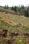 Clearcut Logging In Pacific Northwest.