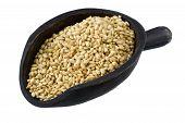 Scoop Of Sweet Brown Rice