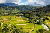 pic of house woods  - Taro fields in Hanalei Valley Kauai - JPG