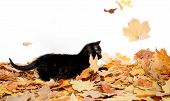 Cute Black Kitten And Leaves