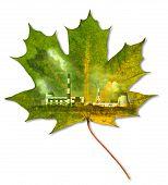 Ecology Environment