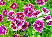 Much beautiful flowers