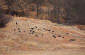 Hillside Flock