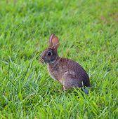 Conejo curioso