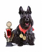 Scotch Terrier con taza de Golg