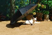 Cat Resting Under Umbrella