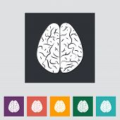 Vector illustration of a human brain.