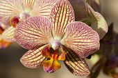 stock photo of freaky  - Freaky orchid pink and yellow - JPG